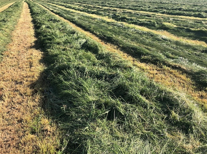 600 x Italian Ryegrass Silage 500kg Rolls 14.6 Protein