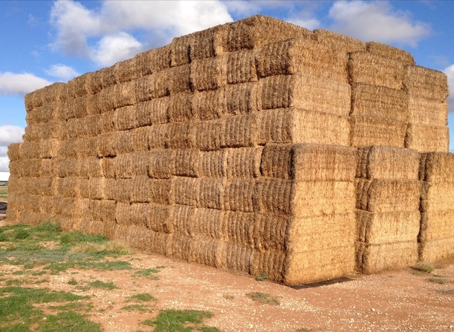 Medic Hay 8x4x3 400 x 530 Approx KG Bales Delivered Price Hamilton-Colac Area.