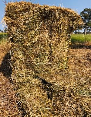 120mt Rye Grass Hay 600-650kg 8x4x3 Bales