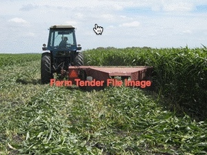 80 Acres of Standing Forage Sorghum For Sale
