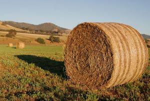 Round bales (type of hay neg)