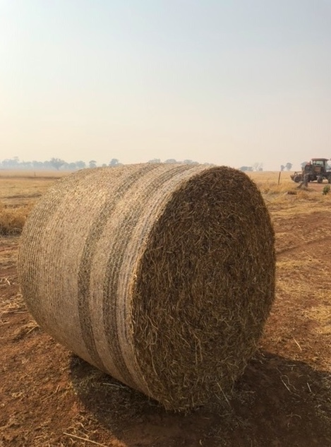 Pea Straw Round Bales(430kg) new season 100 available