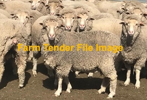 WANTED 200-300 Ewes maiden through to 5 yr old