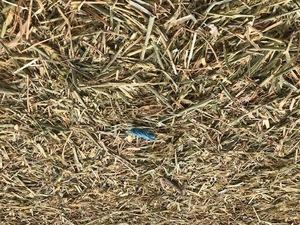 Wheat/Rye Hay