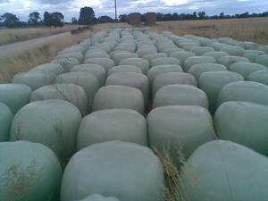 363 X  (4 X 4 Round) Bales Persian Clover & Ryegrass
