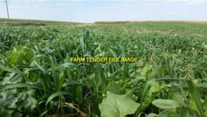 Cover Crop Grain Mixes