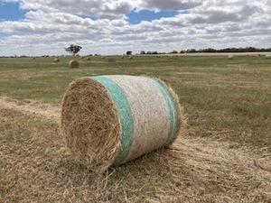Barley Hay 4 x 4 Round Bales (New season)