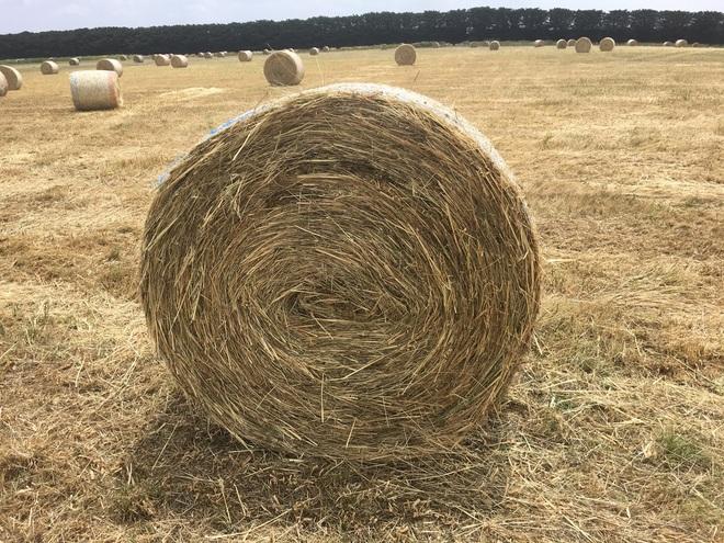 40  Hay 5x4 Bales