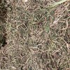 Persian Clover Hay