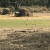 Sliding Sheep Hay Feeders