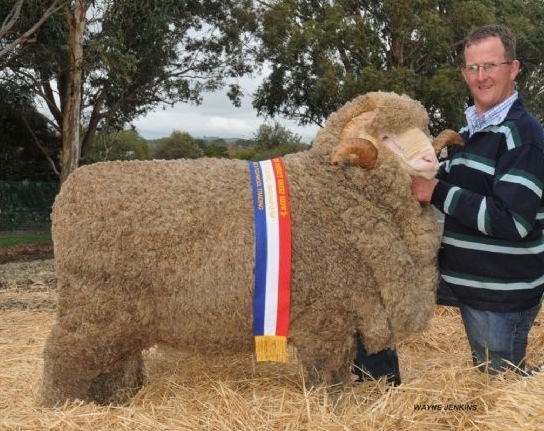 Loddon Valley District STUD MERINO Field Day Friday 26th of February 2021