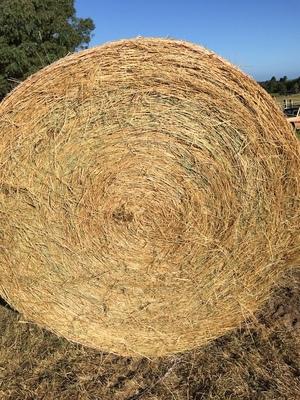 126 x Rye Grass Mix Hay 4x4 Rolls + Freight