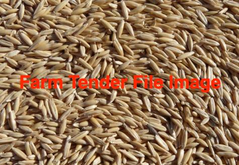 50mt Oat Seed (Radish Free)