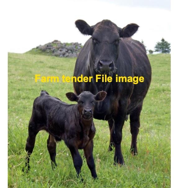 WANTED Angus Cows PTIC or Calves at foot