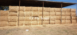 2 Loads Wheaten Hay For Sale in 8x4x3's
