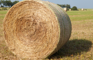 400 x Pasture Hay - Round bales (approx. 400-500kg)