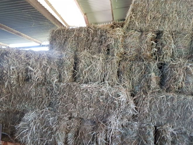 Small Square Bales from pastures