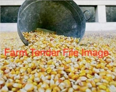 30/mt Feed Corn For Sale ex farm in Verticle storage