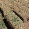 1000 x Lucerne Hay Small Bales - 2nd & 3rd cut - 2nd grade