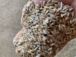 Bevy Cereal Rye