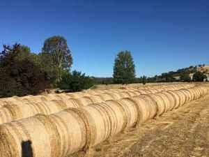 Large Round Perennial Ryegrass 2020 season