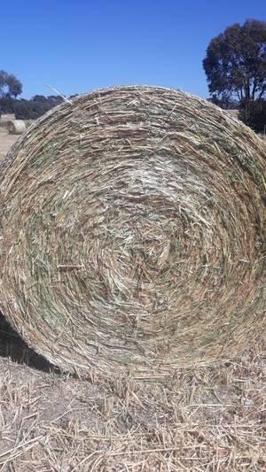 40 m/t New Season Oaten Hay 5x4 Rolls