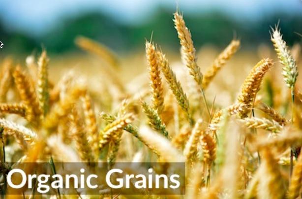 WANTED Certified Organic Grain