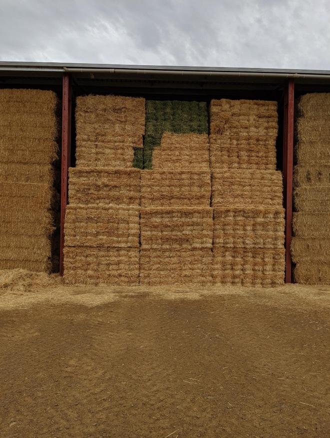 9000 x Wheaten Straw Small Squares