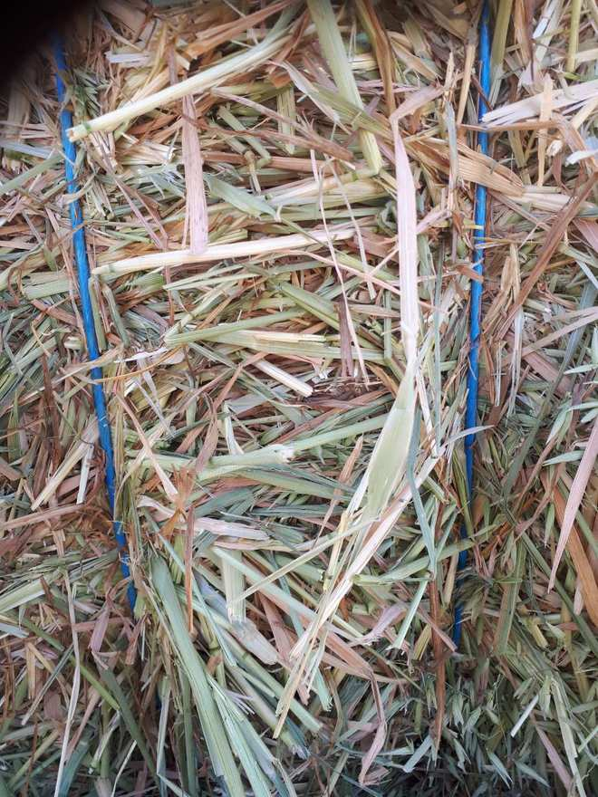 270 m/t Export Quality Oaten Hay Delivery Only