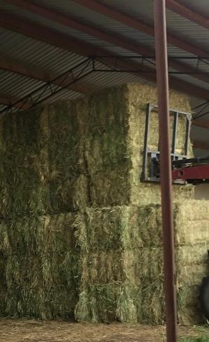 200mt Wheaten Hay 620kg+ 8x4x3 Bales