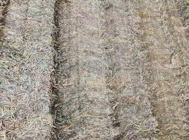 500mt Clover Hay 650-700kg 8x4x3 Bales (New Season 20/21) + Freight