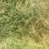 Approximately 400 bales of Quality Medic Hay For Sale in 8x4x3's - Pro: 22.0 - ME: 11.0