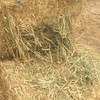 Wheaten hay - old crop 2019 - shedded