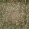 Oaten Hay 500m/t 550kg Approx 8x4x3 Bales ex Farm