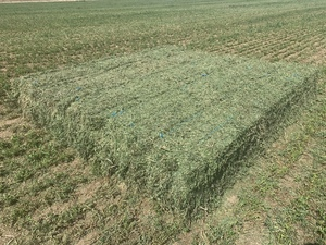 Second Cut Lucerne