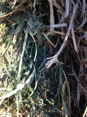 Lucerne Hay For Sale in 8x4x3's