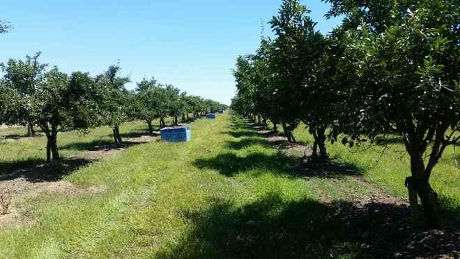 Irrigation Groundwater Bore Farm .