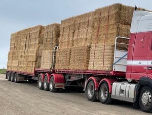Barley straw header trail