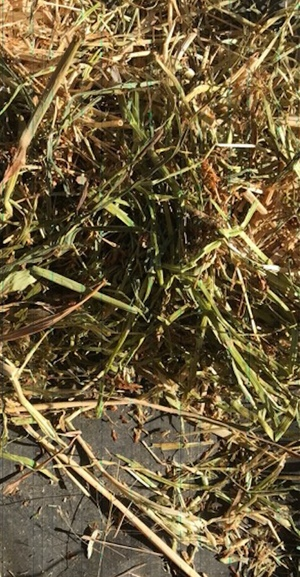 600mt Oaten Clover Rye Grass Hay 540kg 8x4x3 Bales + Freight