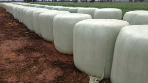 Round Bales of Silage For Sale