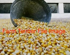 800/mt of Corn, tested gritting