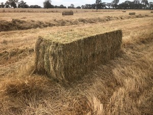 Under Auction - 470 Bales of -n Ryegrass / Clover 3 x 3 x 8 squares