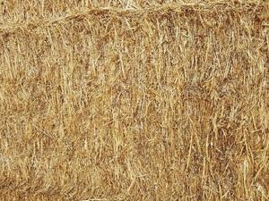 100 Tonne Of Biodynamic/Organic USDA NOPCertified Pea & Oat Hay 8x4x3 Approx 600 KG Bales