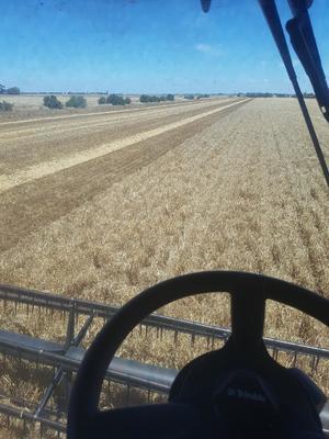 100mt Barley Straw 600kg 8x4x3 Bales