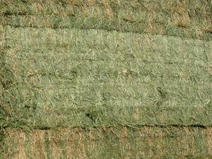 Good quality fresh lucerne hay