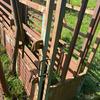 Warwick Cattle Crush