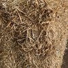 Under Auction - (A135) - Single Load of Pea Straw - 2% + GST Buyers Premium On All Lots