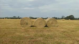 5' Round Bales Rye, Clover. Pasture Hay
