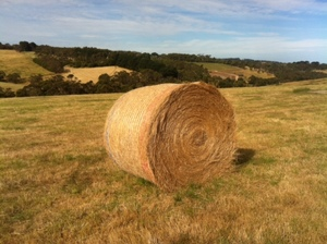 Pasture Hay 5x4 Round Bales