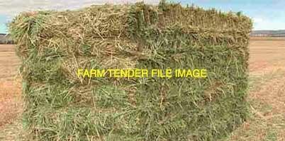 USDA NOP new season organic oaten vetch hay
